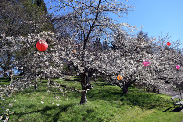 cherry flowers with decorations
